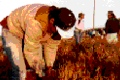 Farmworkers_th