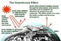 Greenhousethumb