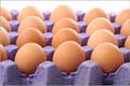 Eggsthumb