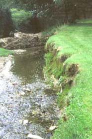 eroded stream bank